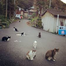 cat island take a tour of the cat islands of the world catster