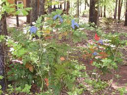 georgia native plants rohdea shadygardens blog