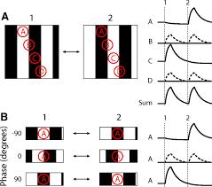 photon imaging nonlinear glutamate release dynamics