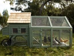 backyard chicken coop pictures