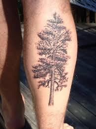 pine tree leg