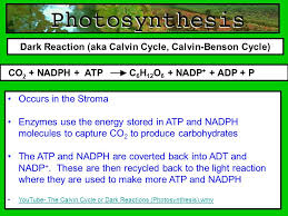The Light Reactions Of Photosynthesis Use And Produce Standard 3 Interdependence Of Living Systems And The Environment 6