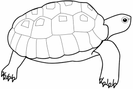 kidscolouringpages orgprint u0026 download turtle coloring pages for