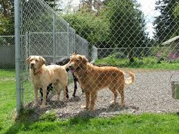 mckenna kennels pet resort where dogs are family and tails are