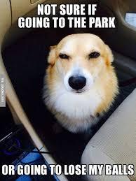 Dog At Vet Meme - funny vet dog meme