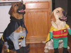 Batman Robin Dog Halloween Costumes Cute Cats Batman Robin