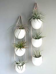 indoor wall plant indoor wall plants u2013 ecofloat info