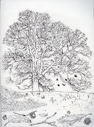 White Oak Tree Drawing Pen Drawings Dan Tucker