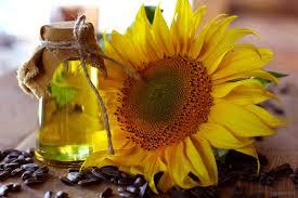sunflower oil wikipedia