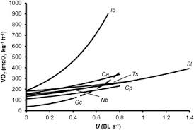 the effects of temperature and swimming speed on the metabolic