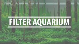 membuat aquascape bening hang on filter aquarium youtube