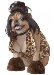 Small Dog Halloween Costumes Ideas 13 Ridiculous Halloween Costumes Pets Halloween