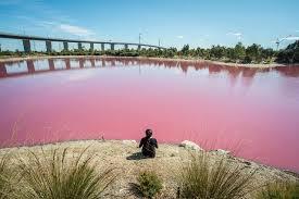 Pink Lake Check In At The Pink Lakes