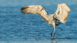 heron meaning 40 crane tattoos meanings photos designs for men and women