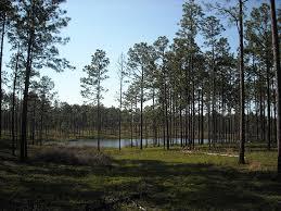 Mississippi forest images American forest foundation media kit jpg