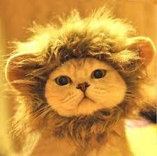 Dog Halloween Costume Lion Mane 13 Cat Wear Images Animals Adorable Animals