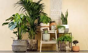 best house plants best indoor plants myfavoriteheadache com myfavoriteheadache com
