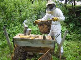 Harvesting Honey From Top Bar Hive Top Bar Hive