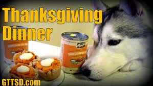 thanksgiving dinner for dogs happy thanksgiving