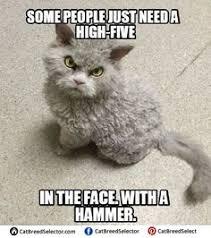 Fat Cat Meme - happy birthday meme cat funny cute angry grumpy cats memes