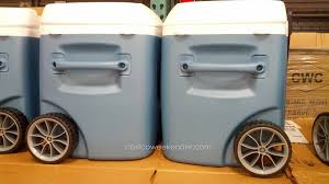 Coleman Stainless Steel Cooler Costco by Coolers At Costco