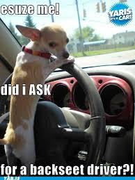 Dog Driving Meme - don t leave me home stayboy lock info pinterest