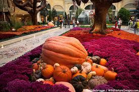 Bellagio Botanical Garden Botanical Gardens Photos