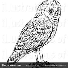 owl clipart 1119383 illustration by prawny vintage