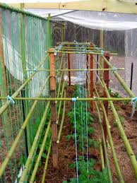 bamboo plant support sticks u2014 guadua bamboo