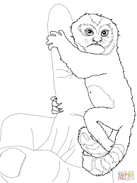 common marmoset coloring page free printable coloring pages
