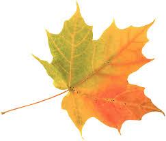 fall leaf leaves fall leaves and leaves