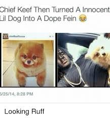 Chief Keef Memes - chief keef then turned a innocent lil dog into a dope fein 62514