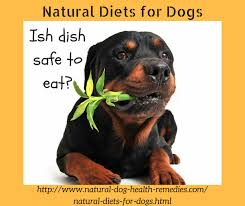 natural diets for dogs natural organic dog food