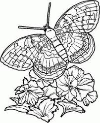 hard butterfly coloring pages coloring pages