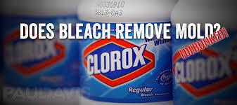 does bleach kill mold debunked paul davis restoration