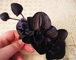 black orchid flower black orchid etsy
