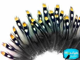 moonlight feathers 17 best plumas images on fly fishing jungles and fly