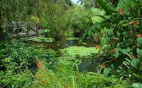 caribbean barbados u0027s garden attractions telegraph