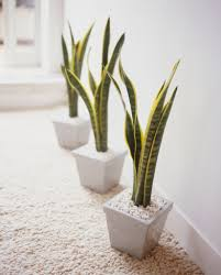 Modern Houseplants by Makeovers And Cool Decoration For Modern Homes Best 25 House