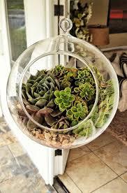 clear glass succulent terrarium terrarium inspiration