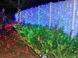Botanical Gardens Lights Lights At Botanical Gardens Picture Of Florida