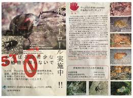 tokina 10 17mm okinawa nature photography