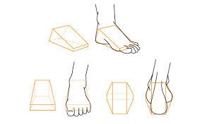Anatomy Of A Foot Human Anatomy Fundamentals How To Draw Feet