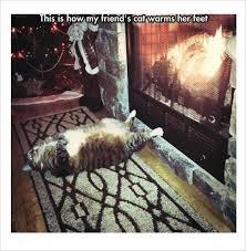 Hilarious Cat Memes - 10 fresh cat memes today pet owners shared hilarious cat photos
