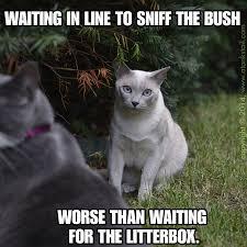 Make Your Own Cat Meme - a tonk s tail err tale cat art hop making a meme