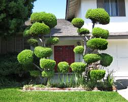 the poodle trees sometimes daily always random