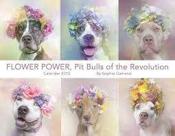 Flower Power Nyc - flower power is one year old u2014 sophie gamand