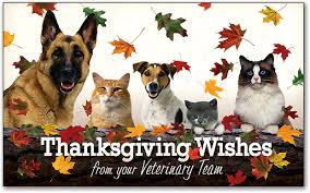 happy thanksgiving animal ark