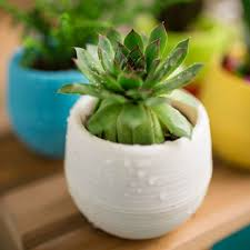 compare prices on plastic round flower pot online shopping buy