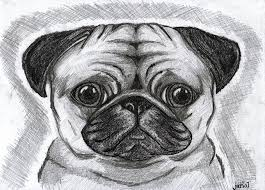 pug drawings because pugs are just the cutest things by